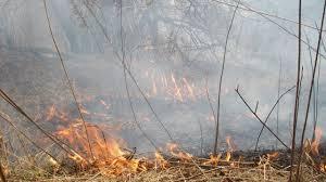 Из-за аномальной жары запрещено посещение лесов