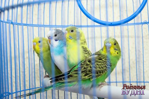 Скучаете? Купите попугая! В Пружанах открылся новый зоомагазин