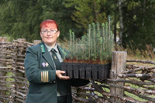 Ко Дню работников леса: по финской технологии
