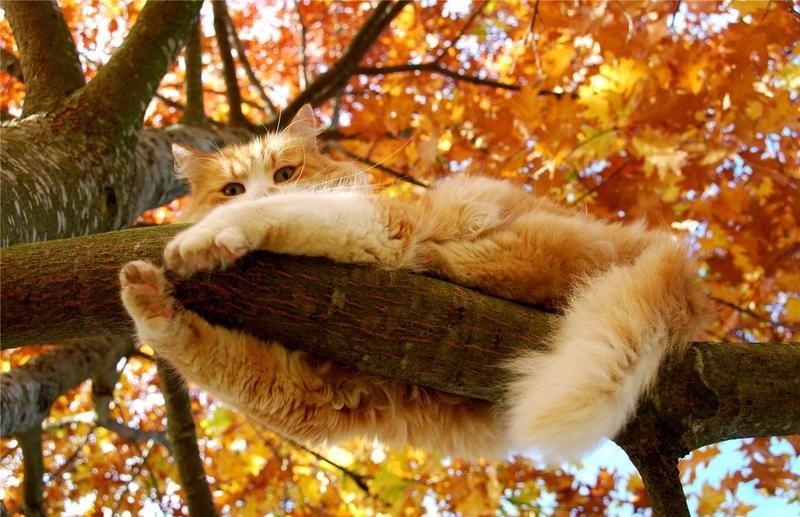кот осенний