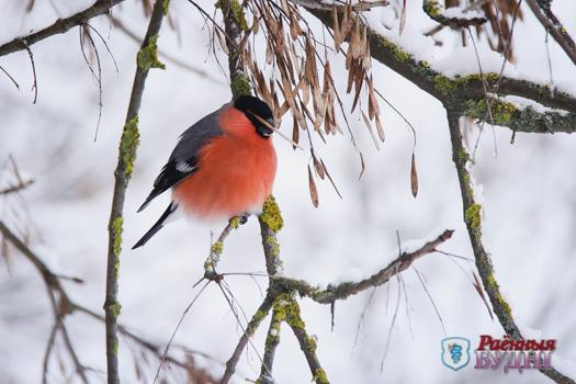 Как не навредить птицам в морозы?