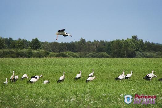 Фотафакт: зямля пад белымі крыламі