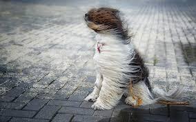 В Пружанах ожидается сильный ветер. МЧС просит принять меры предосторожности