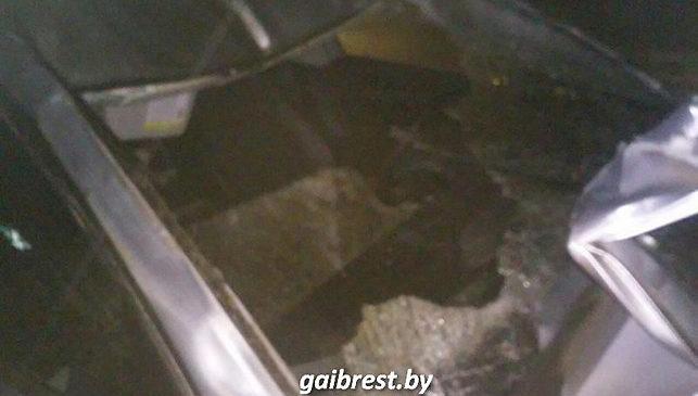 1 января легковой автомобиль сбил молодого зубра