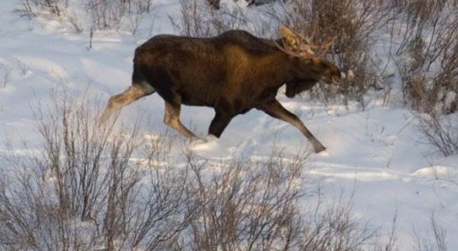 Сразу два случая браконьерства зарегистрированы на территории Сухопольского лесничества