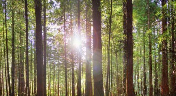 О запретах на территории лесного фонда (действует с 3 июня)