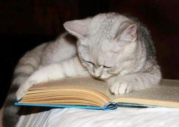 Покажи, что ты читаешь, и получи сладкий приз!