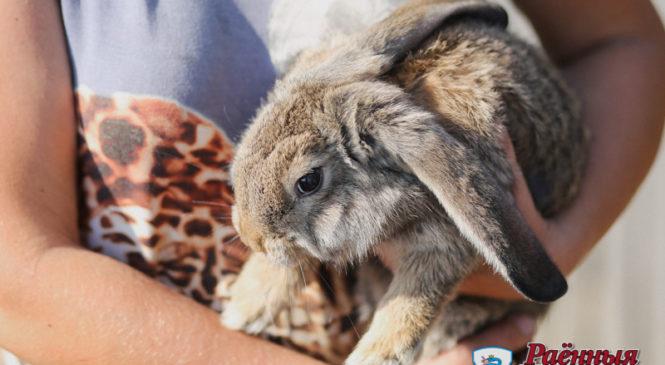 Кролики — это не только ценный мех. Александр и Анастасия Тихоновичи рассказали про необычное хобби