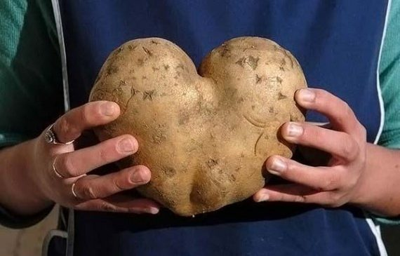 Где и почем принимают картошку в Пружанском районе?
