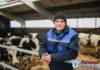 Фотофакт: один из лучших животноводов ОАО «Великосельское Агро»