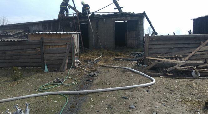 На пожаре в Долках погибла корова