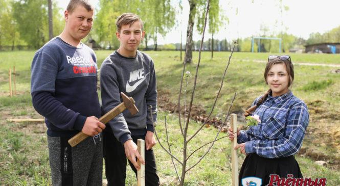 В Могилевцах школьники заложили сад в честь 75-летия освобождения Беларуси