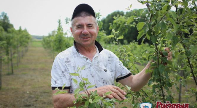 Наливные яблоки и ягоды от фермера Петровича!  Налетай!
