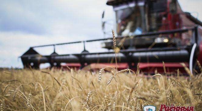Узнали для вас расценки на уборку зерновых на частных участках в разных хозяйствах района