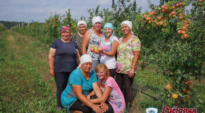 Расцветали яблони и груши. Саду ОАО «Ружаны-Агро» 10 лет