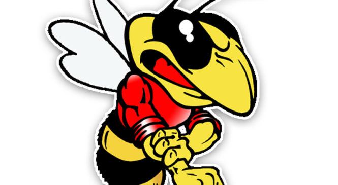 74 раза спасателей вызывали на дезинсекцию гнезд насекомых