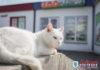 «Директор» магазина и «администратор» кафе. Знакомьтесь: кот Андрей и кот Степан