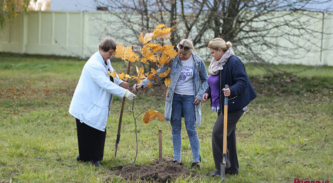 Сотрудники «Рб» в честь юбилея посадили деревья