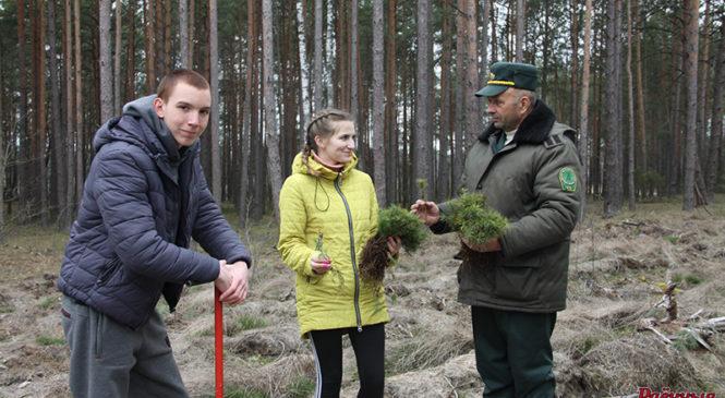 В районе прошли две акции, в рамках которых были высажены деревья