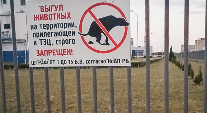 Так можно ли выгуливать собак возле мини-ТЭЦ?