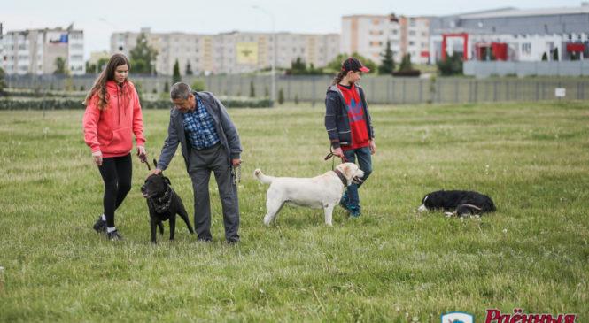 В Пружанах будут дооборудованы площадки для выгула собак, а также усилится контроль за регистрацией животных