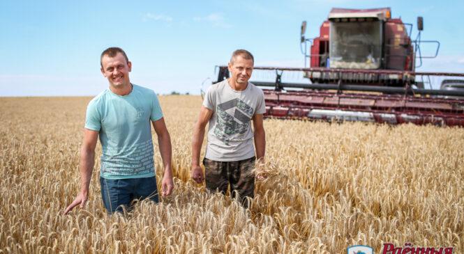 Пружанские аграрии первыми в области намолотили 100 тысяч тонн зерна!