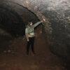 Міжнародная навуковая экспедыцыя занялася вывучэннем кажаноў, які жывуць у падвалах Ружанскага палаца