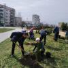 У рамках акцыі «Разам за зялёную Беларусь» у мікрараёне «Паўночны» былі высаджаны дэкаратыўныя хваёвыя дрэвы