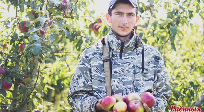 Вітаміны з яблычнай краіны. У пладовым садзе ААТ «Айчына» збіраюць смачны і карысны ўраджай